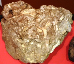 Sample of the Bristol Dinosaur material on show at the Bristol Museum. Photo: Ian Randall