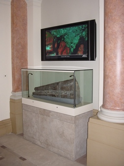 The restored skull in situ, 2008