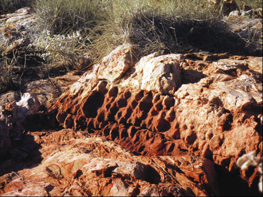 Archaean stromatolites from the 3430 million year old Strelley Pool Group in the Pilbara region. Photo courtesy, Geological Survey of Western Australia
