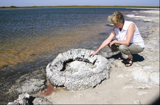 Stromatolites in the saline Lake Thetis, Western Australia. Photo: Ken McNamara