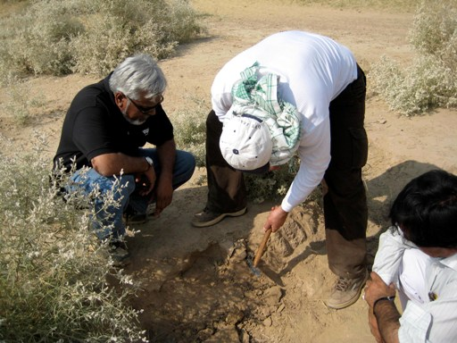 Ali Tabrez assists Anwar Alizai in collecting sand samples for OSL dating from a bed underlying modern active dunes in Punjab.