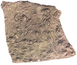 A metre-sized block of early Pennsylvanian sandstone covered with fossil tracks from the Maringouin Peninsula of New Brunswick