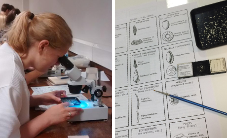 Identifying Microfossils at the Natural History Museum