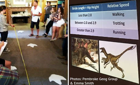 Dinosaur footprints - measuring stride length