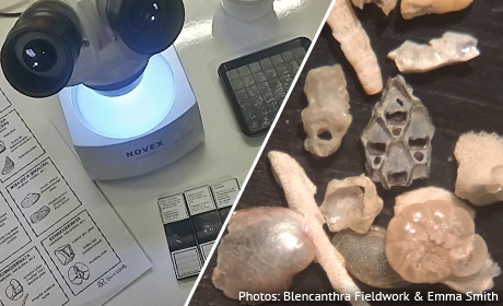 Microfossils workshop at the NHM