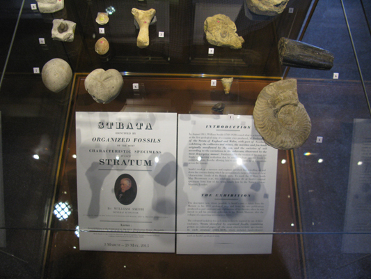 The exhibition of 26 of Smith's fossils ran from 3 March - 29 May