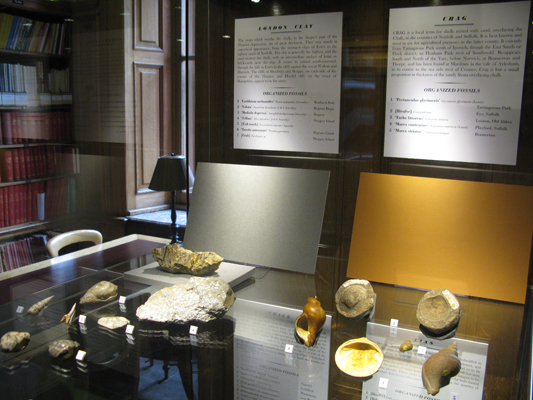 The Library's display of William Smith's fossils, on loan from the Natural History Museum